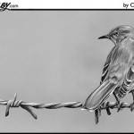 Mockingbird on Barbed Wire